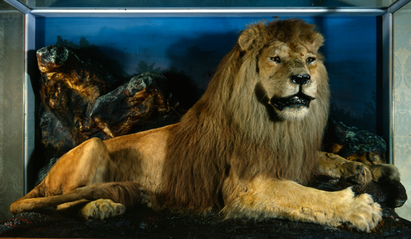 nelson_the_lion